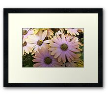 Thousands of Pedals Framed Print