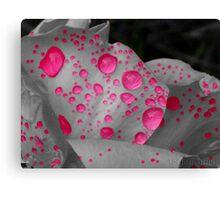 Hot Pink! Canvas Print