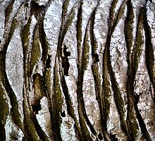 Palm Bark Boogie by Susana Weber