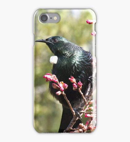 Tui..... I rule the roost .......! iPhone Case/Skin