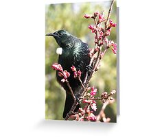 Tui..... I rule the roost .......! Greeting Card