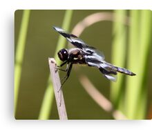 Mottled Mosquito Muncher Canvas Print