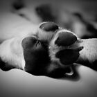 Puppy Feet by FFRPhoto