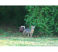 Foxy Momma! Photographic Print
