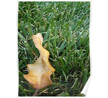 Autum Oak Leaf Poster