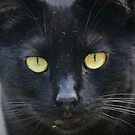 Golden Eyes by Catherine Walsh