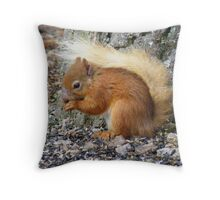 The Cairngorms: Red Squirell Throw Pillow