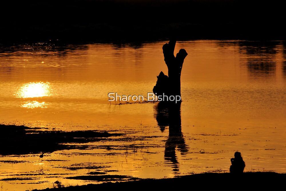 Sentry duty on the Chobe River, Botswana by Sharon Bishop