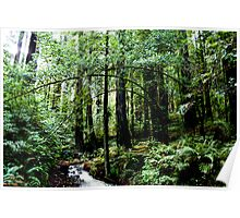 Creek - Sequoia National Park Poster