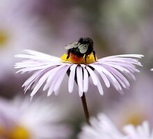 Busy as a Bee! by Diane  Holdsworth