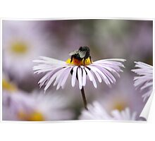 Busy as a Bee! Poster