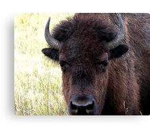 FATHER BISON Canvas Print