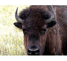FATHER BISON Photographic Print