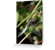 Male Chaser Greeting Card