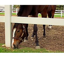 SEVEN LEGGED HORSE Photographic Print