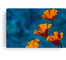 California Poppy Canvas Print