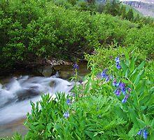 Sneffels Creek by Bill Hendricks