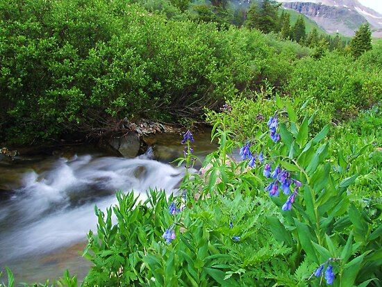 Sneffels Creek by Bill Hendricks