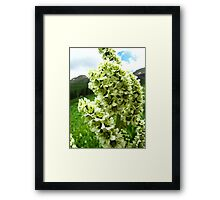 Yankee Boy Basin Wildflowers - Colorado False Hellebore Framed Print