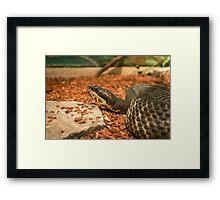 Snake Bite Framed Print