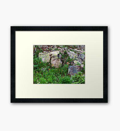 Yankee Boy Basin Wildflowers Framed Print