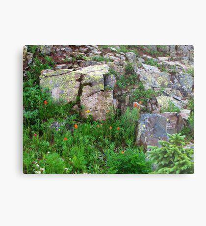 Yankee Boy Basin Wildflowers Metal Print