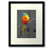 orange crest  Framed Print