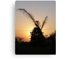 sun set sihouette Canvas Print