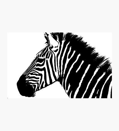 Zebra in black and white Photographic Print