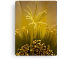 Cactus super macro (2) Canvas Print