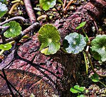 Swamp Undergrowth by RayDevlin
