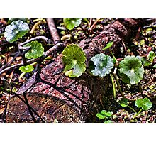 Swamp Undergrowth Photographic Print