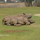 Rhino Romance by BabyBundtCake