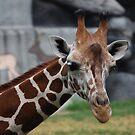 Giraffe by JenniferJW