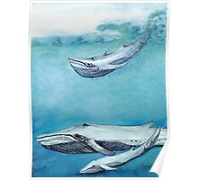 Blue Whales Poster