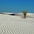 Lonely Yucca at White Sand Dunes by algill