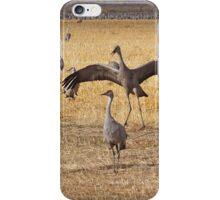Dancing Cranes iPhone Case/Skin