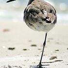 Balancing Bird on Beach Cape San Blas by CheVacs