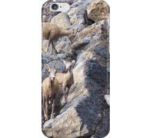 Bighorn Sheep iPhone Case/Skin