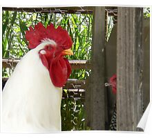 Chicken Courting Poster