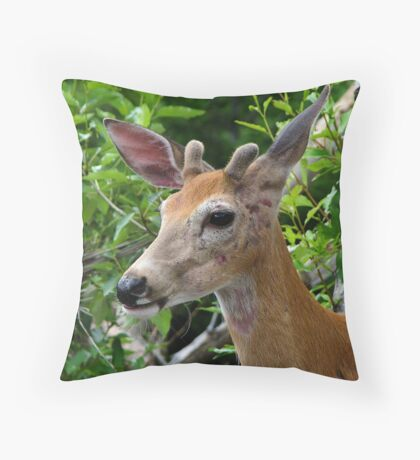 Scarred buck Throw Pillow