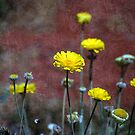 Textured Flowers by Stormygirl