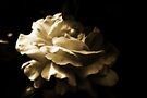 Sepia Rose by Evita