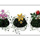 Flowerpots by Katy Breen