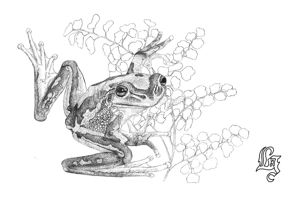 Green and golden bell frog and maiden-hair fern by Laura Grogan