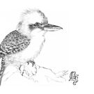 Laughing kookaburra by Laura Grogan