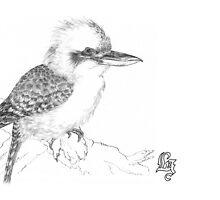 Laughing kookaburra by Laura Grogan