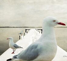 Snow Gulls by Chris Armytage™