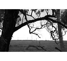Growing Limbs Photographic Print