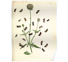 British moths and their transformations Henry Noel Humphreys and John Obadiah Westwood 1845 0191 Poster